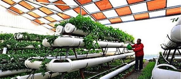 construccion de techos para invernadero