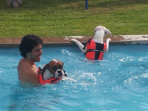Ejercicios acuaticos en las pensiones para perros