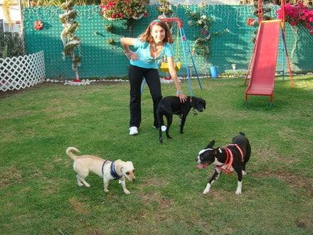 pension para mascotas